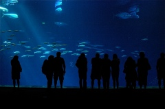 Georgia Aquarium, Atlanta, Georgia