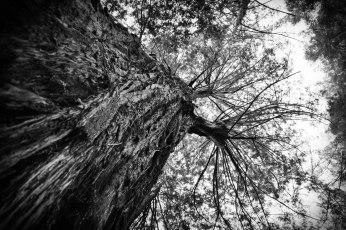 Stretch, Portola Redwoods, La Honda, California