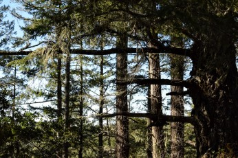 Intersect, Portola Redwoods, La Honda, California