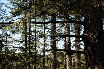 Intersect, Portola Redwoods, La Honda, California
