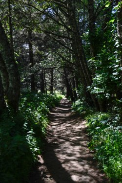 Coastal Trail, Point Reyes, California
