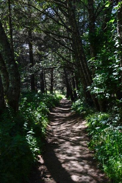 Coastal Trail, Point Reyes, California
