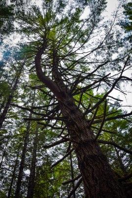 Butano State Park, California